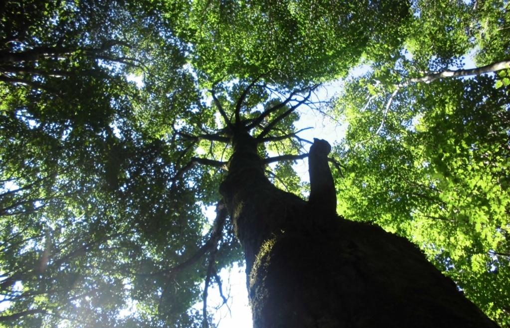 木と葉っぱの間からの木漏れ日